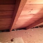 2 x 4 rafters!